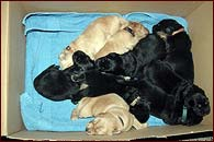 D - PUPPIES ARE 1 WEEK OLD!